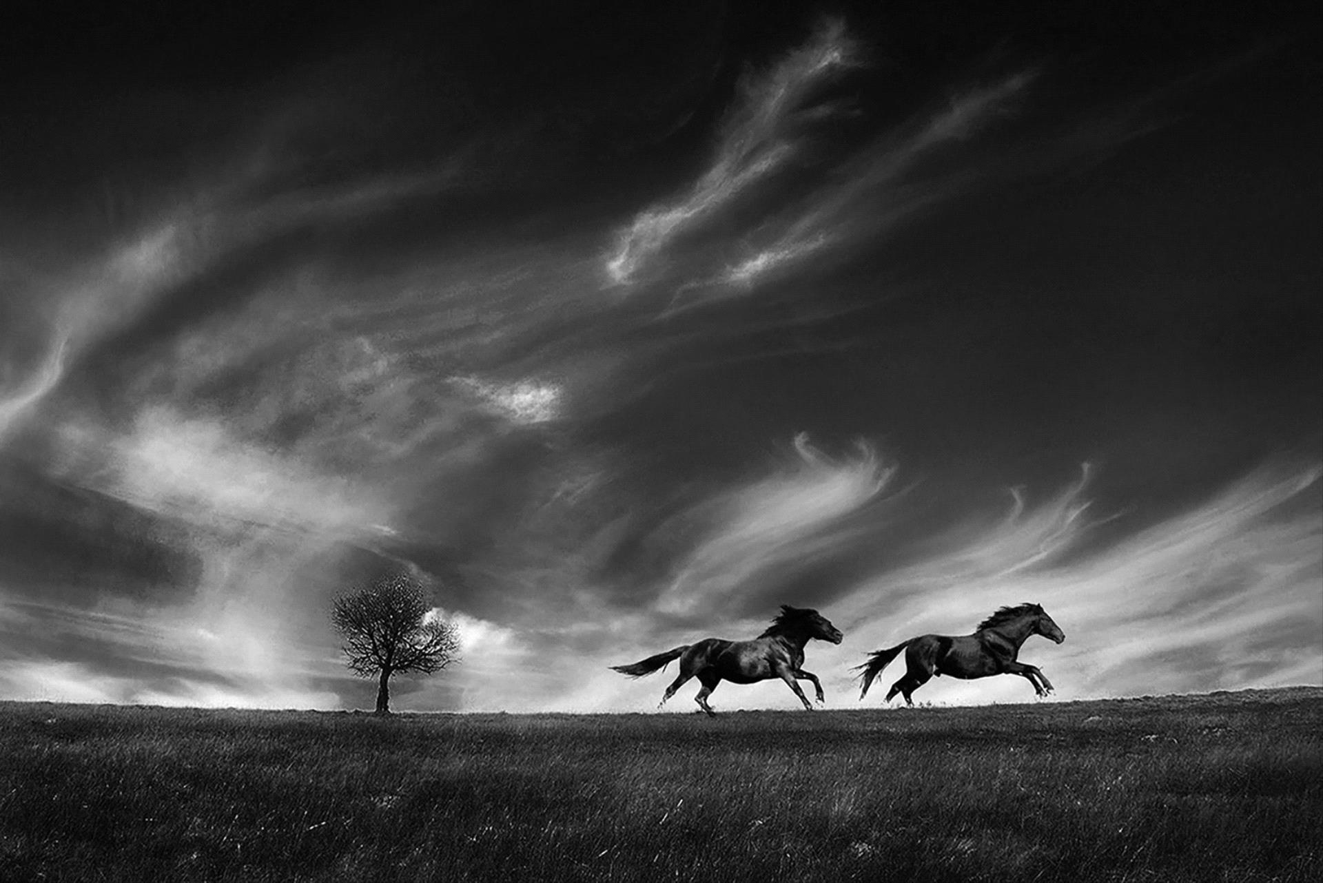 Golden Dragon Photo Award - Lajos Nagy (Romania) - Running With The Wind